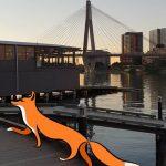 Fox sighting in Glebe